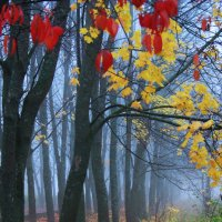 Разноцветная весна :: Роман Буторин