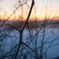 Холодный рассвет :: Антон Бабалян