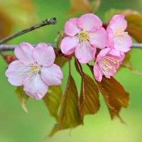 Весна пришла :: Александр Сивкин