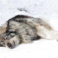 Зимний сон :: Анна Гладышева