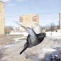 Хочу в кадр! :: Анна Гладышева