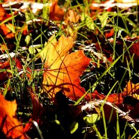 Осенний лист упал в траву. :: Татьяна Беляева