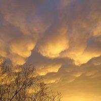 Чудное небо, над головой. :: Александр Бабарика