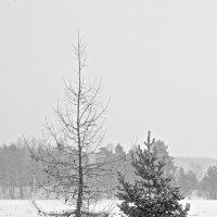 Двое вышли из леса :: Михаил Луговой