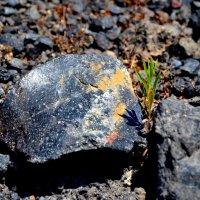 жизнь на вулкане ... , ни воды , ни земли :: человечик prikolist