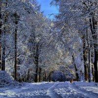 дни зимние :: Владимир Хижко