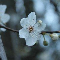 spring :: Anastasia Petrova