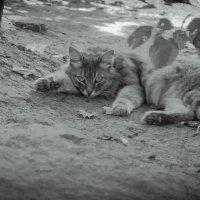 Тяжелое утро :: Борис Калюжный