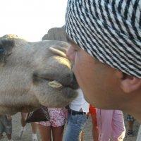 Целующийся верблюд :) :: Алексей Аксенов
