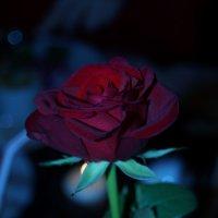 rose :: Алёна Мосеенкова