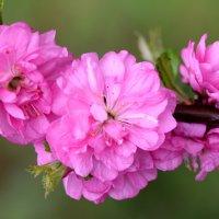 Весна ) :: Кристина CrazyKISS