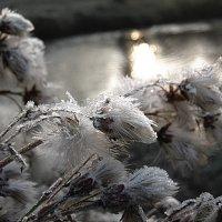 Морозная тишина :: ольга хадыкина