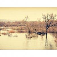 Разлив реки :: Александр Литовченко