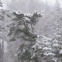 Утро в январе.... :: Елена Шишлянникова
