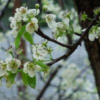А у нас веснааа!!! :: Максим Битюцкий