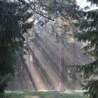 Утро  в лесу :: Евгения Неговская