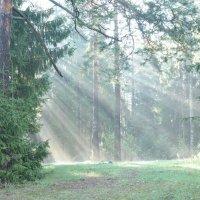 Утро в лесу 2 :: Евгения Неговская
