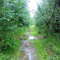 После дождичка в тайге ... :: Дмитрий Ростегаев