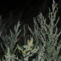 Растение. :: Тимур Валеев
