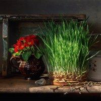 Из серии: Садовые хлопоты :: Виктория Иманова