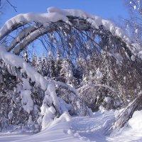 Сказка леса :: Михаил Табаков