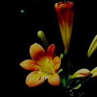 Цветок :: Hovhannes Hovhannisyan