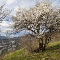 весна :: Евгений Khripp