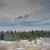 весенний лес :: Дмитрий Брошко