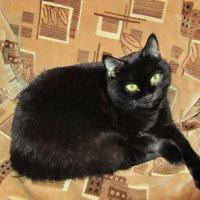 не каждый чёрный кот изгой :: tgtyjdrf