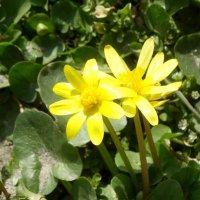 В марте на солнышке... :: Тамара (st.tamara)