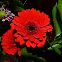 Цветы в День рождения. :: zoja