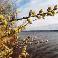 весна :: Vitalij P