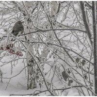 холодно :: павел бритшев