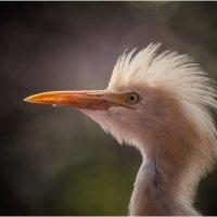 Ирокез...Парк птиц...Куала-Лумпур,Малайзия. :: Александр Вивчарик