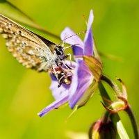 Бабочка. :: Виктор Евстратов