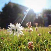 Солнечный цветочек :: Ирина A