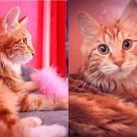 Выставка кошек :: Анастасия Нефедьева