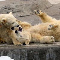 медвежата :: Михаил Бибичков