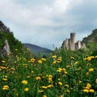 одуванчиковая весна :: Elena Wymann