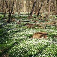 Весеннее цветение. :: Валерия Комова