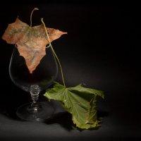 Бокал и кленовые листья :: Андрей Куликов