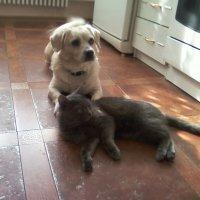 Гармония. Как кошка с собакой... :: Владимир Звягин