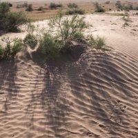 Весна в пустыне #2 :: Григорий Карамянц