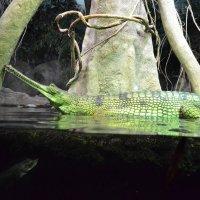Из жизни крокодилов :: Ольга