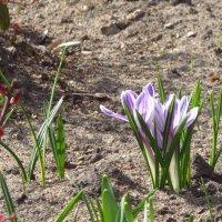 весна пришла :: Yulia Sherstyuk