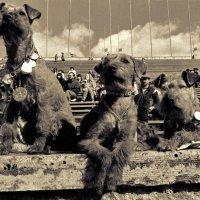 Собачья тема 4 :: Цветков Виктор Васильевич
