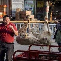 Добрые люди носят коз на руках :: Николай