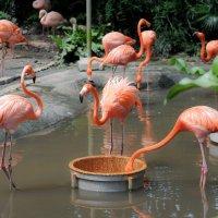 Розовые фламинго :: Maxim Unarov