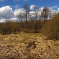 IMG_6344 - Апрель похожий на апрель :: Андрей Лукьянов