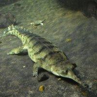 Под водой :: Ольга